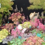 A Colourful Heuchera Display