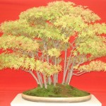 Stunning Bonsai Tree is a Work of Art